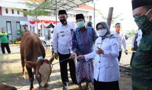 Puluhan Hewan Kurban Iduladha Disebar di Dua Kecamatan di Jombang
