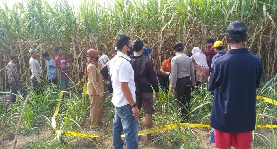 Pria 80 Tahun di Kediri Ditemukan Meninggal di Areal Sawah Tebu